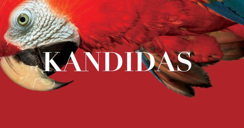 """Leonardo Bernsteino operetės """"Kandidas"""" premjeros plakatas."""